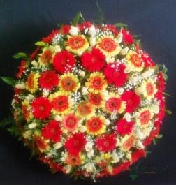 Coroa Redonda - FNB017