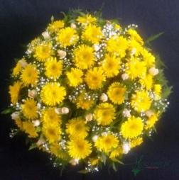 Coroa Redonda - FNB018
