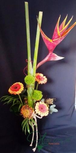 Flor do Paraíso